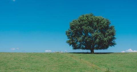 beautiful big tree in new zealand - How to Find Land to Build on in New Zealand
